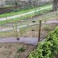 Des vignes plantées au jardin des plantes, avril 2015