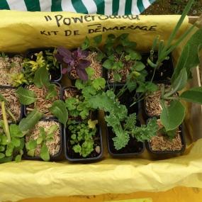 La Power Salad de Zoé Scott, le kit de démarrage...